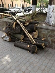 Засохшее дерево больше не будет портить вид у входа в наш дом. И мы обязательно посадим новое!