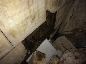 """Один из """"источников"""", текущих в подвале нашего дома прямо из стены"""
