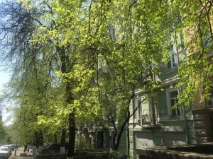 Фасад нашего дома по весен утопает в зелени