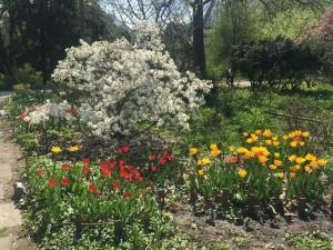 Яркие краски ботанического сада