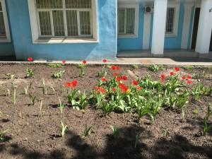 В отличие от нашего дома, цветочные клумбы у соседних домов цветут и пахнут