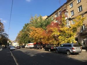Наша улица Тарасовская во всей своей осенней красе