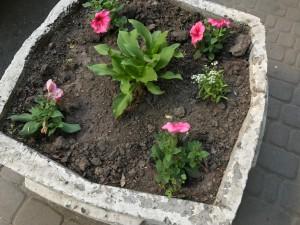 Свежие цветы - свежие впечатления