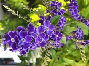 Цветы радуют человека, но сами нуждаются в заботе