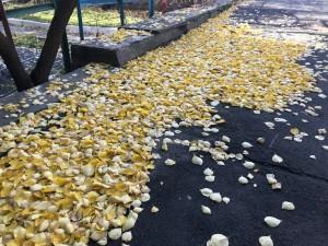 По мнению ЖЭКа, опавшая листва - лучшее украшение двора